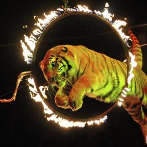 Цирки Щигров