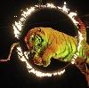 Цирки в Щиграх
