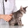 Ветеринарные клиники в Щиграх